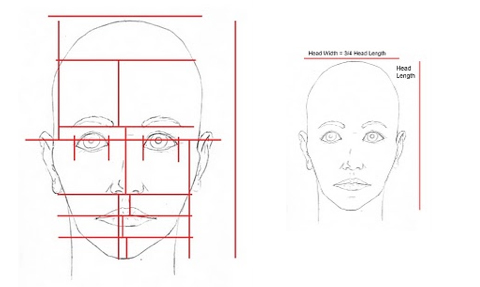 A-215: Basic Proportions of the Head